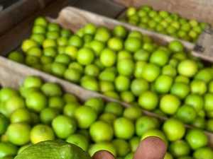 Drawing a lime in the sand, farmer sows seeds of innovation