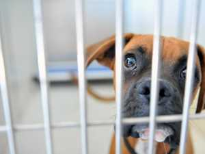 Our pet shame! 1000 animals locked up