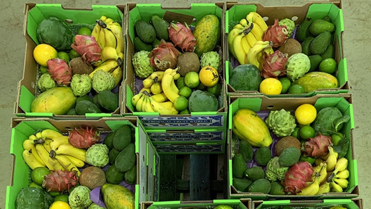 Tropical Fruit World fruit boxes