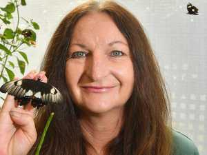 Butterfly influx a welcome treat in hard times