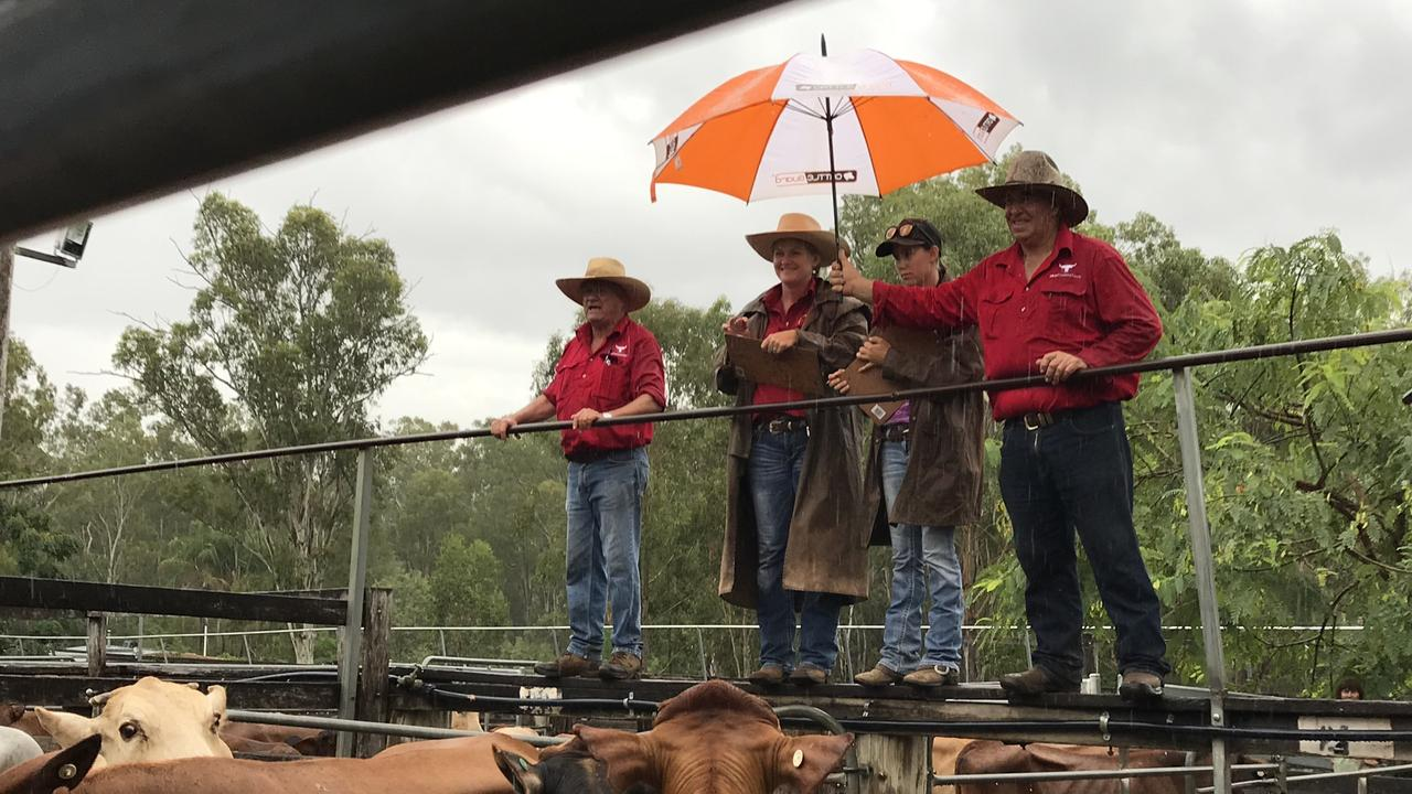 Welcome rain falls during a Eidsvold Livestock and Property prime and store sale in 2019. Picture: Contributed.