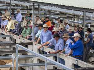 COVID-19 scare closes this week's cattle sales