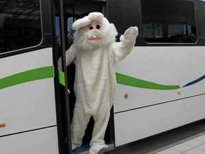 COVID-19 means Noosa misses the free Easter buses