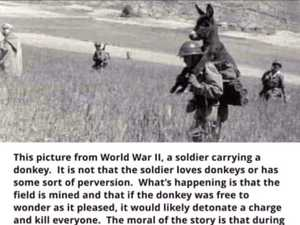 The true story behind that WWII donkey photo