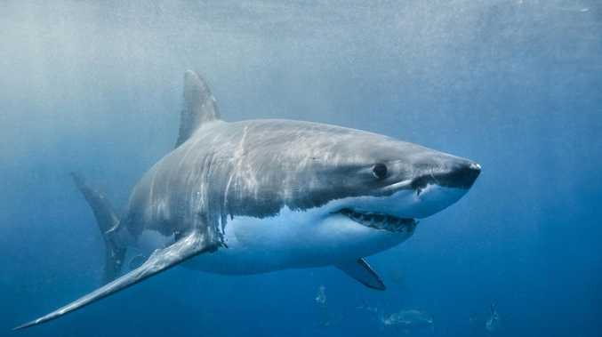 Man killed by shark on a Central Queensland island
