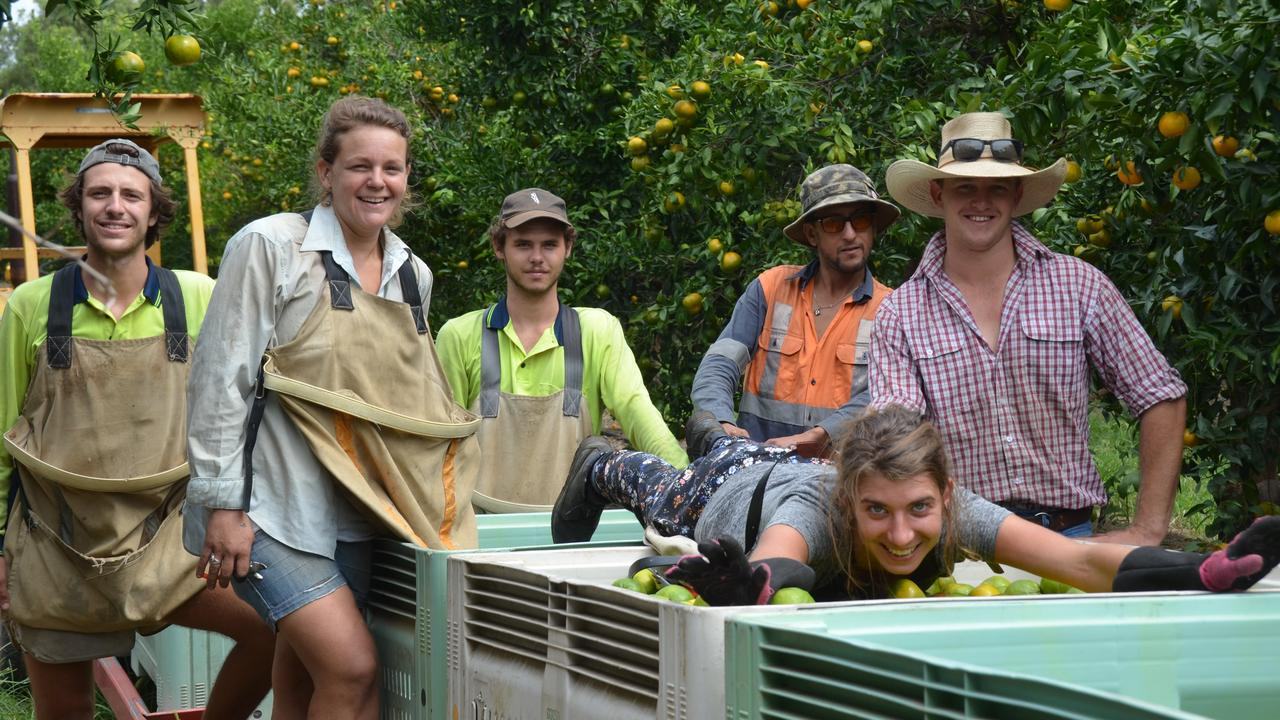EXTENDED VISAS: Workers at Gayndah's Crossroads citrus farm in 2018. Picture: Felicity Ripper