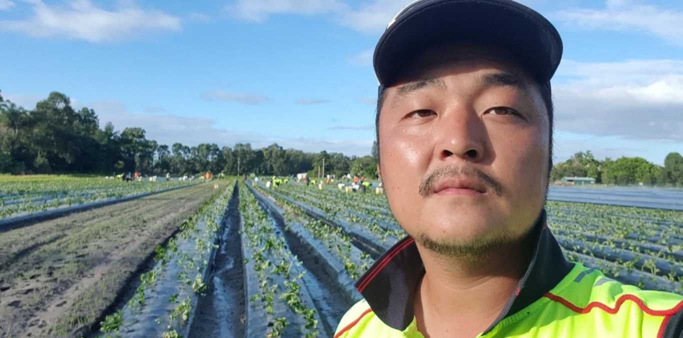 Beerwah strawberry farmer Ray Kim worries social distancing rules will mean he will not be able to pack all of his fruit this season.