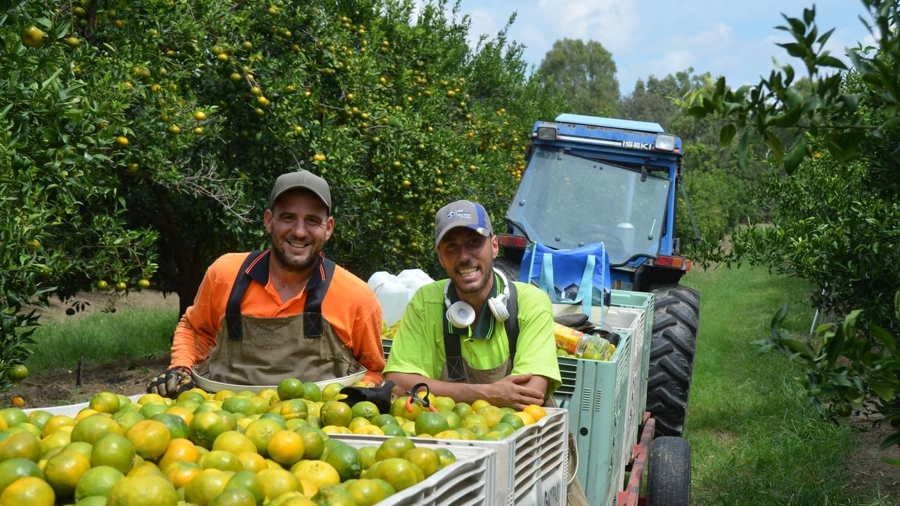 Workers at Gayndah's Crossroads citrus farm in 2018. Picture: Felicity Ripper