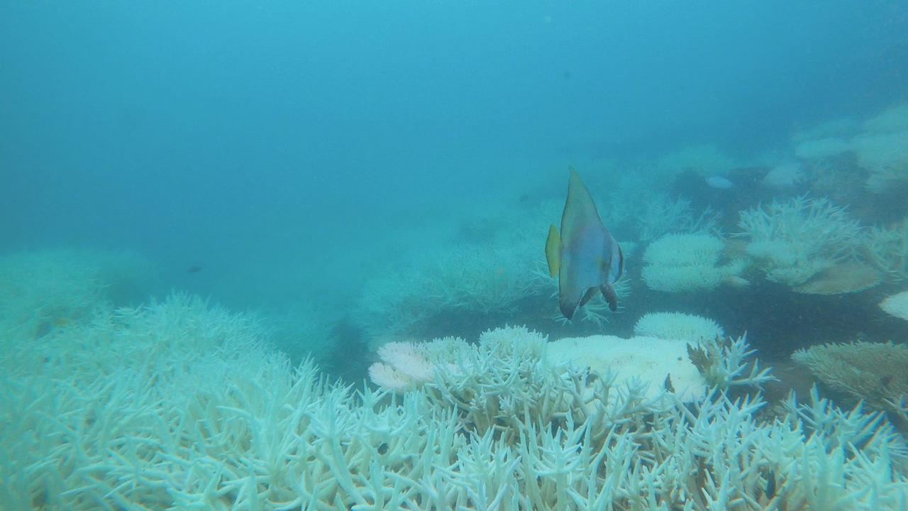Coral Bleaching on the reef off North Keppel Island