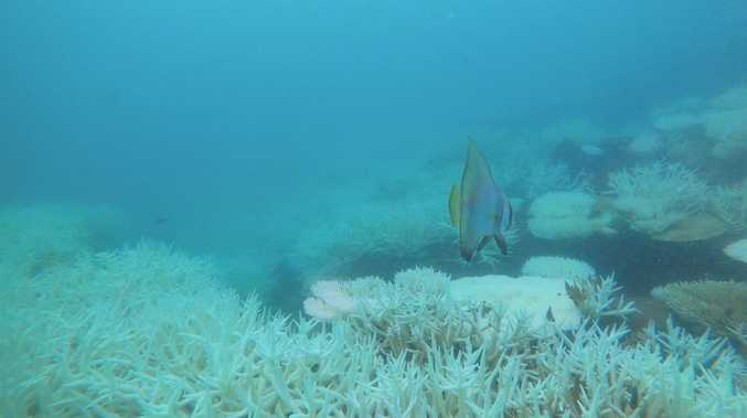 A diver's grim discovery confirms a disasterous bleaching event