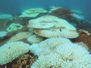 Hope for Whitsundays' reefs after third mass bleaching