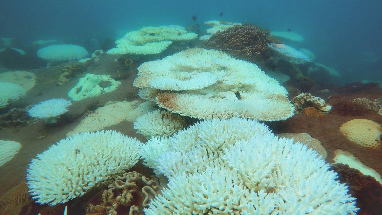 Coral Bleaching on the reef off North Keppel Island. Dr David Wachenfel said while the Whitsundays had experienced moderate bleaching, there next few weeks would be critical to see whether it survived.