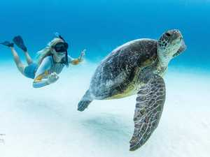 How you can enjoy Lady Elliot Island from home