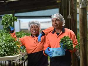 Capricornia farms benefit from working VISA changes