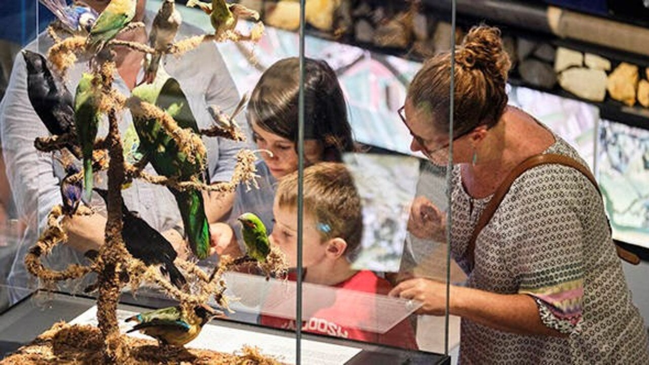 Tweed Regional Museum encourages everyone to learn more about Tweed's unique cultural and natural history with their latest exhibition.