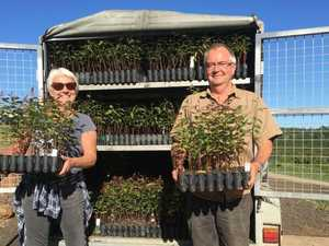 Seedling donations support koala care groups