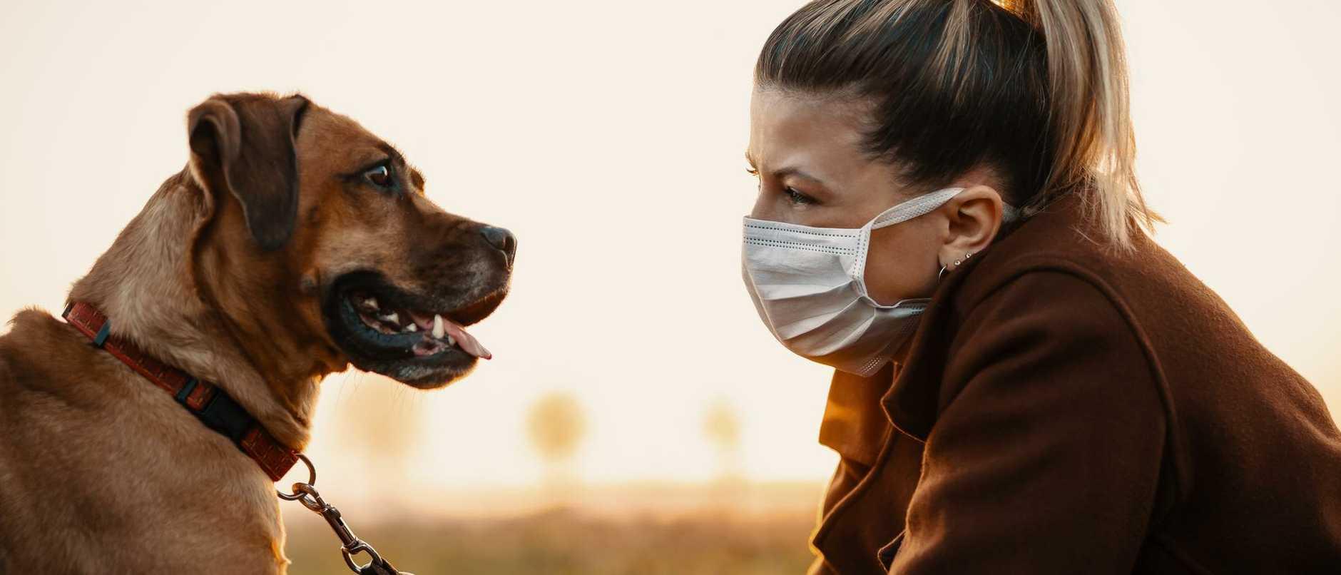 Pet owner corona virus pandemic covid-19