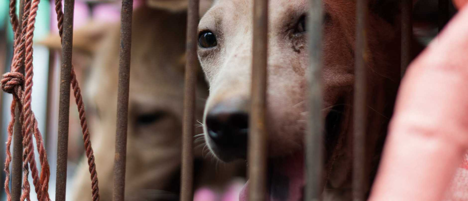 "China is expected to classify dogs as pets rather than livestock in a move that has been hailed as a ""game-changer"" by animal rights activists."