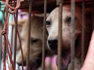 China changes dog classification from livestock