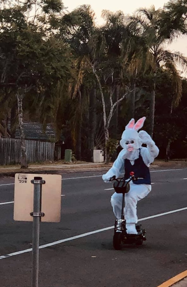 The giant rabbit was spotted regularly over the weekend.