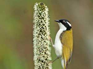 Tiny bird just loves to drink nectar