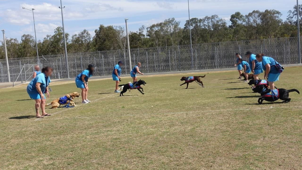 IN TRAINING: Pups in prison program in action last year. Photo: Supplied