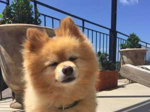 Dog's terrible haircut goes viral