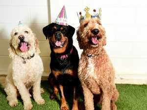 What COVID-19 crisis? Dogs have birthday blast