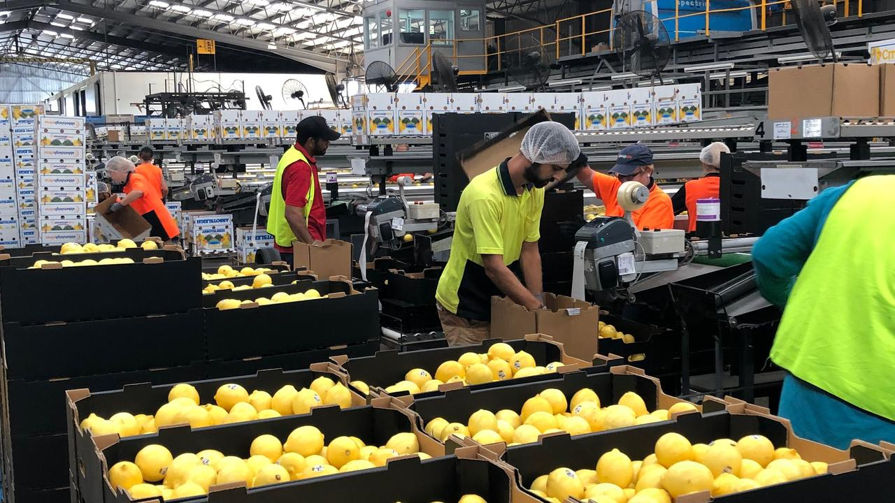 STRONG TEAM: Workers in the Abbotsleigh packshed don't have an issue with social distancing.