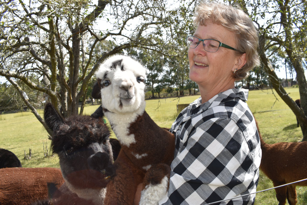 Image for sale: Jenny Jennings with a two week old alpaca.