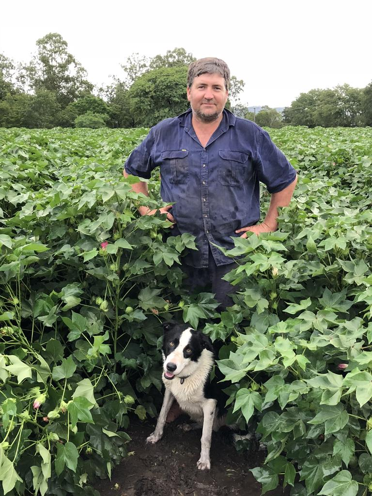 Toogoolawah farmer Mark Cowley in his cotton crop. PHOTO: Supplied
