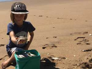 Thousands of dead fish wash ashore at Moore Park Beach