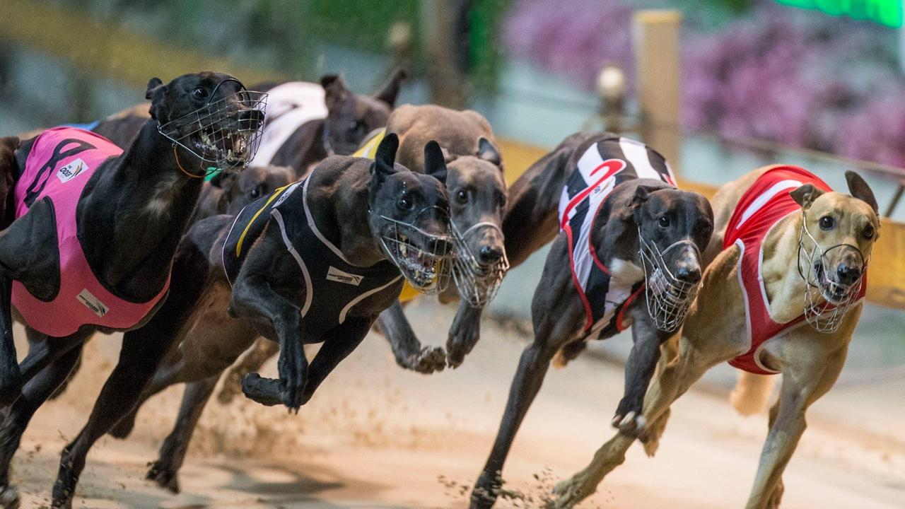 The Grafton Greyhound Racing Club are set to have a much quieter July than usual with the annual racing carnival put on ice. Picture: Craig Golding/Greyhound Racing NSW