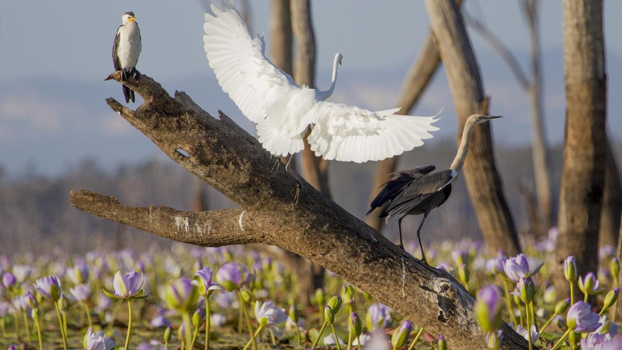 Bird life at Lake Nuga Nuga.