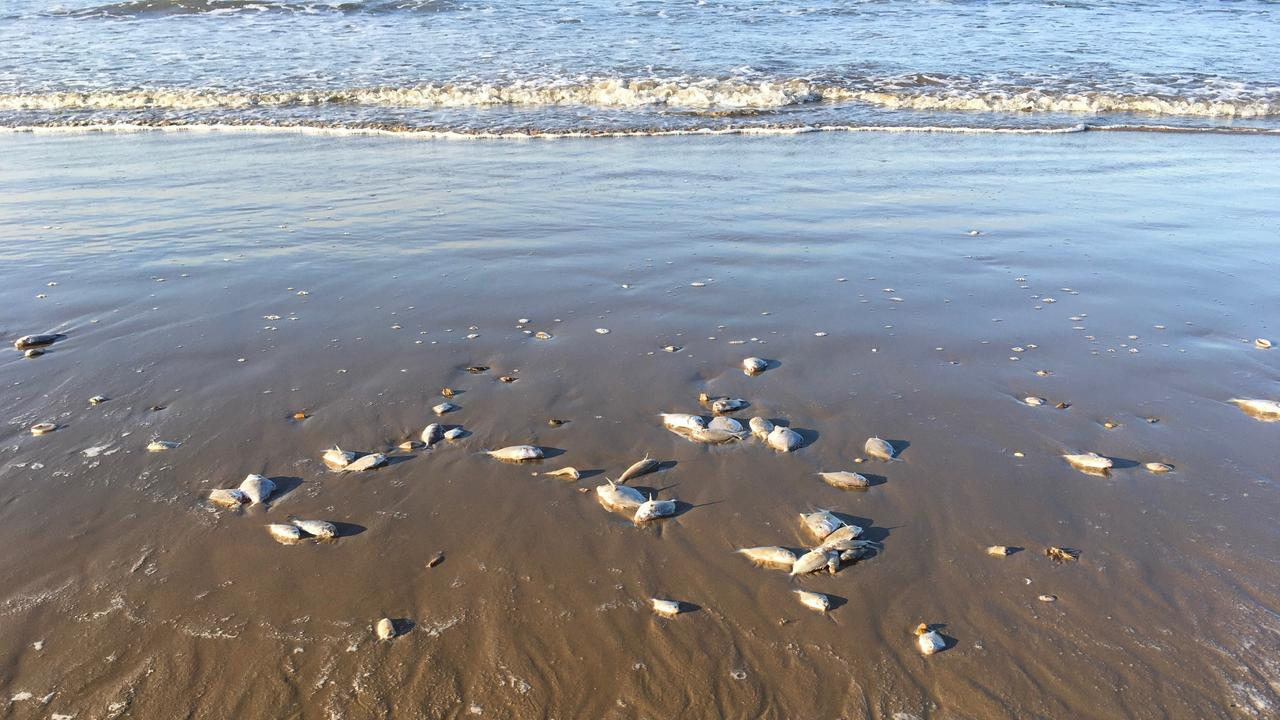 Moore Park Beach resident Alan Corbett shared photos of the amount of dead fish he saw on Tuesday.