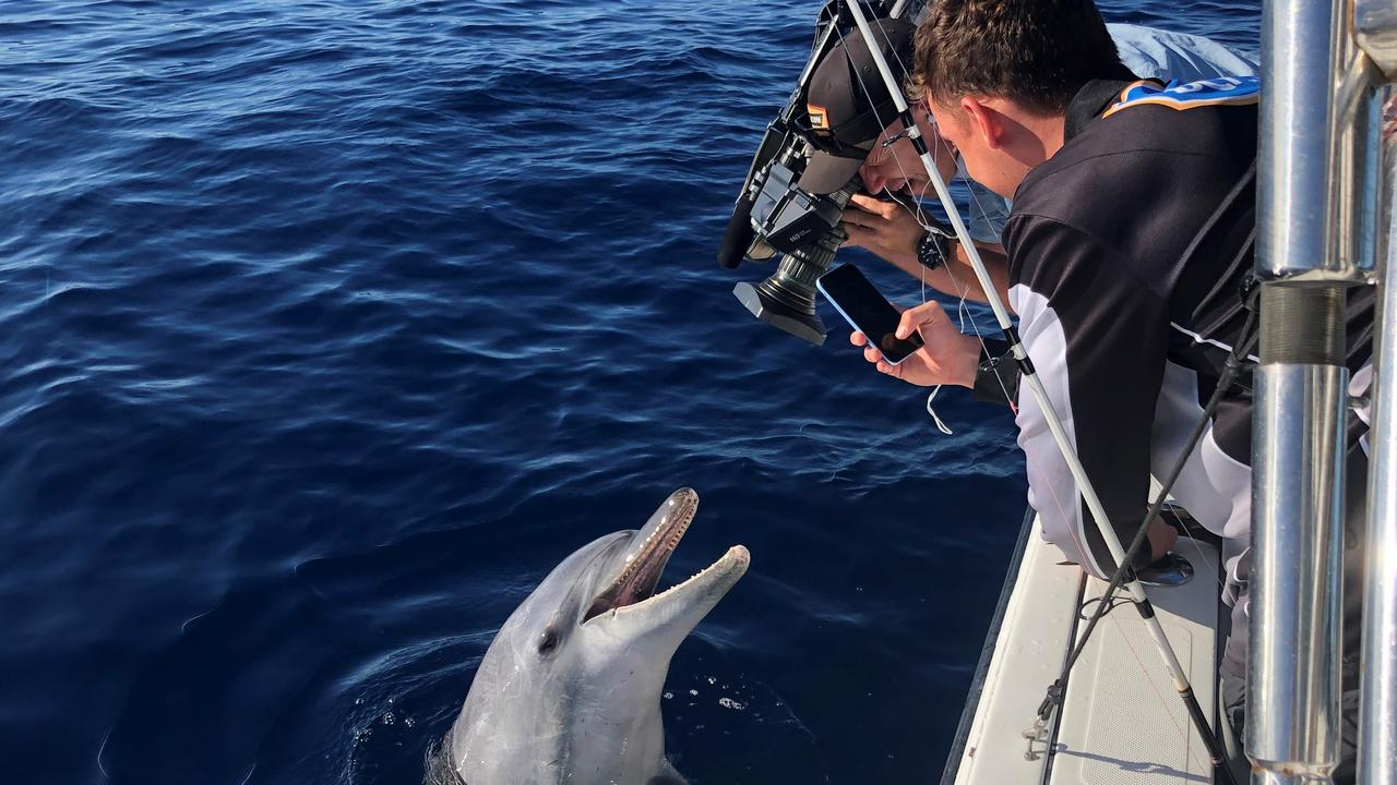 Scott Hillier and the Creek to Coast crew had an incredible encounter with a dolphin during filming off Mooloolaba on Wednesday.