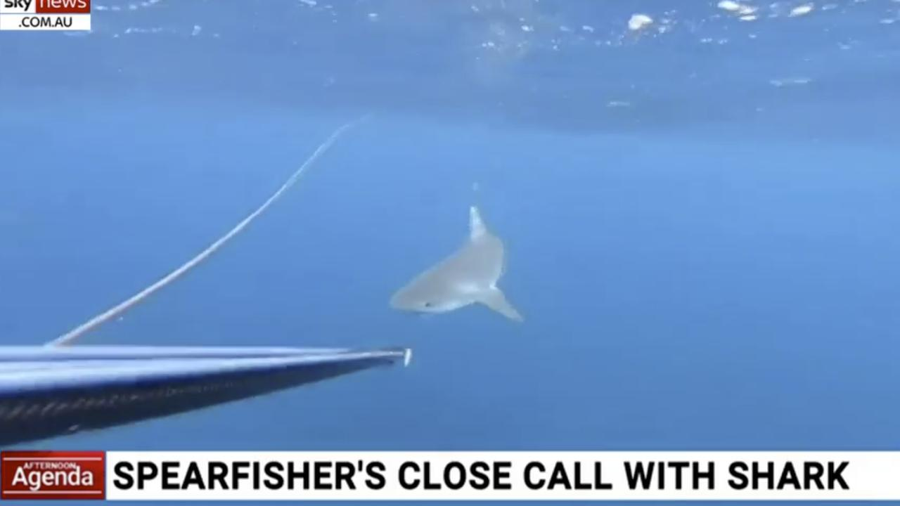 Lara never fired her spear gun at the shark, instead keeping eye contact and using her gun to create distance. Picture: Sky News