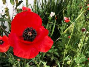 Lest we forget: Anzac Day Roll of Honour
