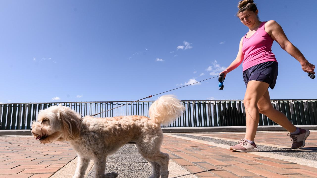 Saturday, April 4, 2020, Sydney. A woman walking a dog along the promenade at Coogee Beach. (Photo by James Gourley/The Sunday Telegraph)