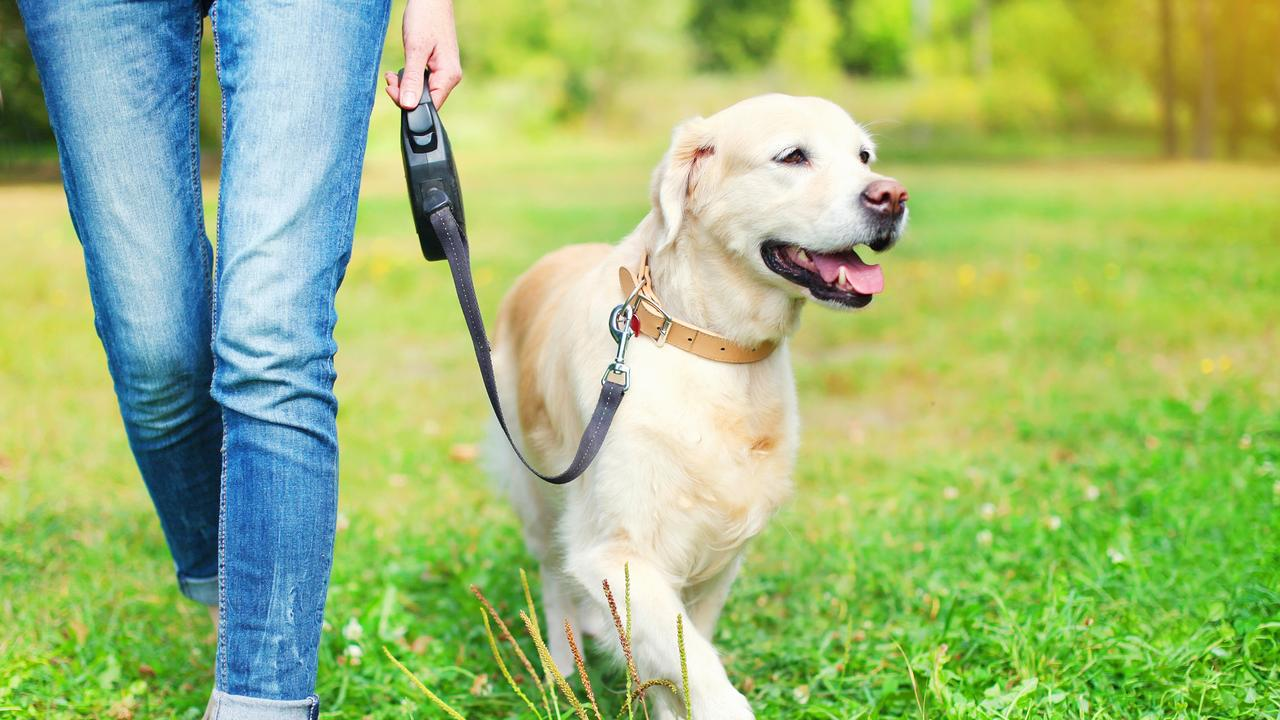 A dogs primary sense, smell is a cornerstone of how your pet views the world.