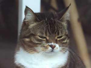 Two pet cats contract coronavirus