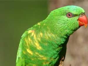 Briggsy's birds: Common garden visitor