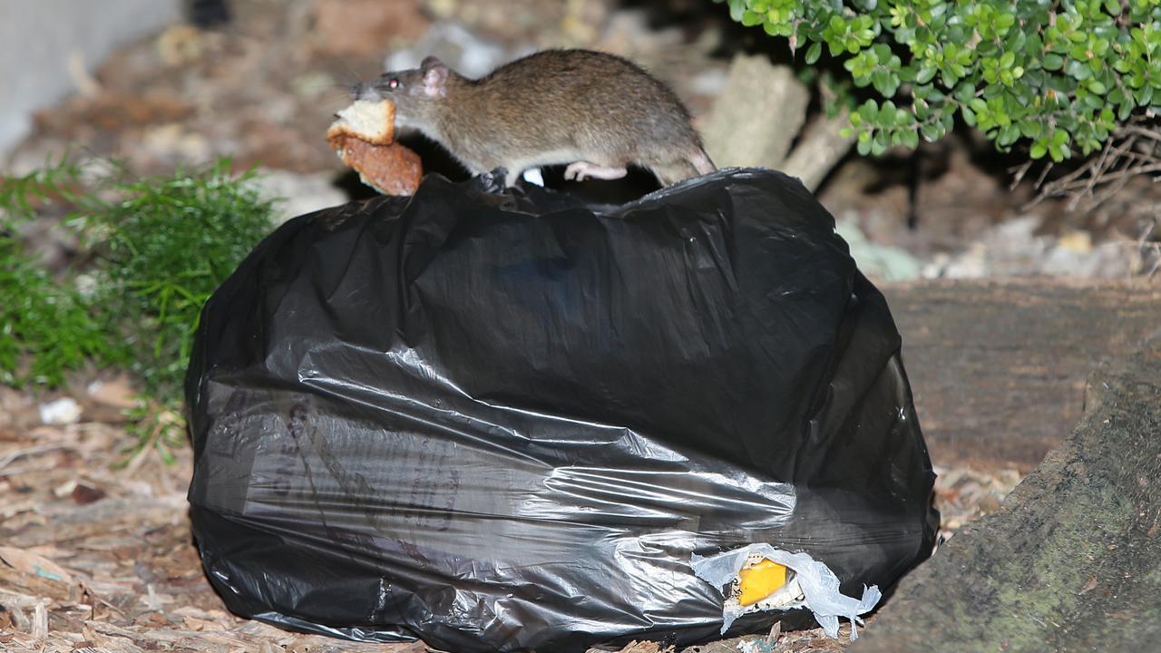 Rats Surry Hills