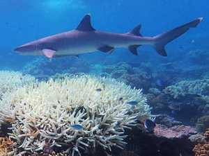 Why we should all be worried about Barrier Reef bleaching