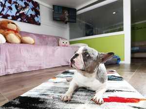 Inside $3 million-dollar luxury resort for pets