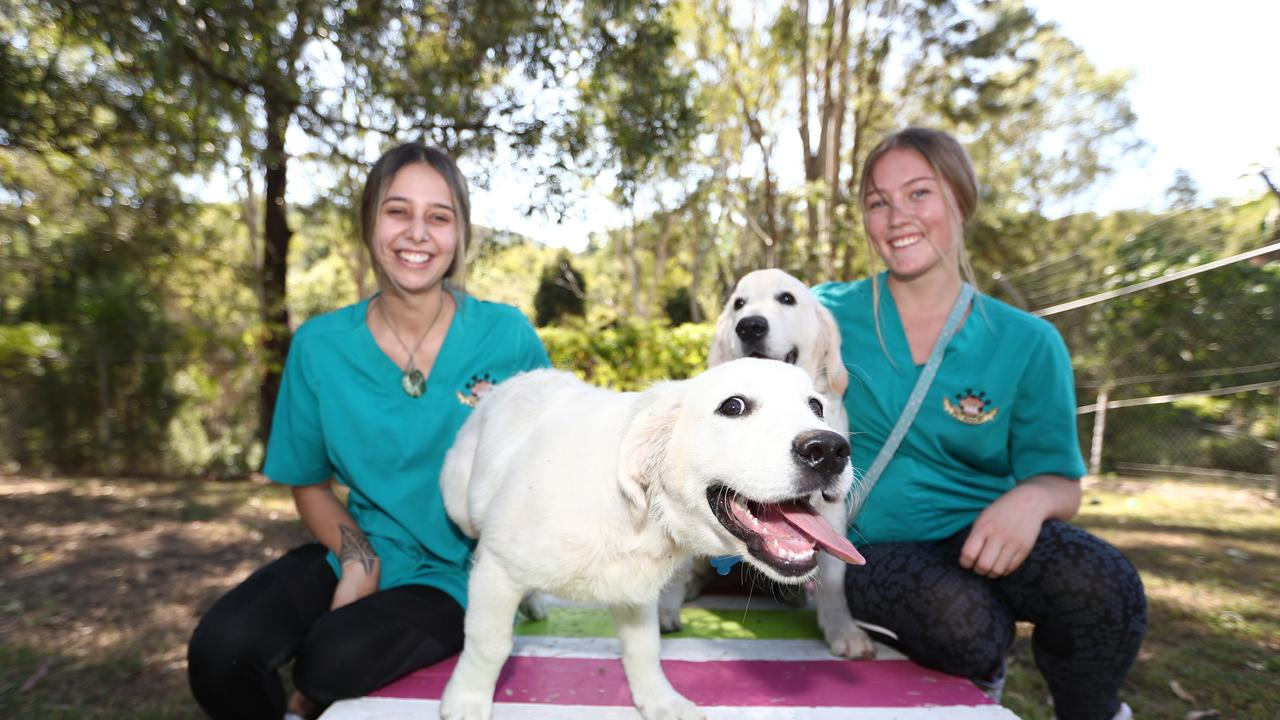Staff Baylee Brash, 19, and Reagan Mill, 18, ( right ) with dogs Bailey and Atticus. Photograph : Jason O'Brien