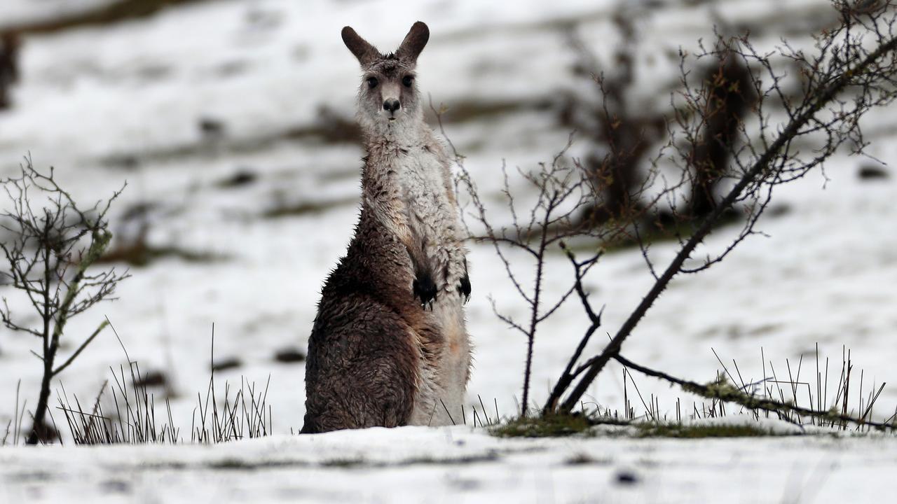 NSW Spring Snow