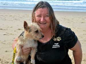 Code red for canine rescue charity