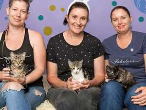 Rescue group struggling to meet costs of cat crisis