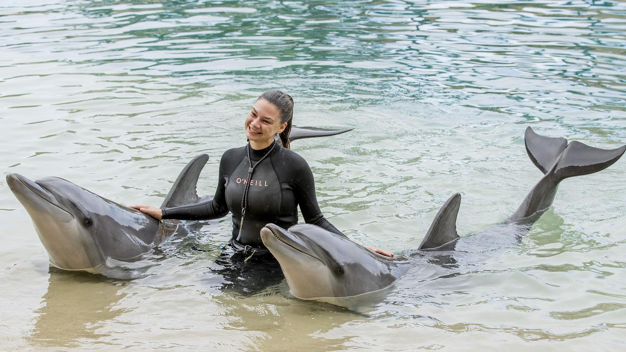Marine Mammal trainer Brooke Pelizzari with dolphins at sea World as the government unveiled $95 million for theme park support. Picture: Jerad Williams